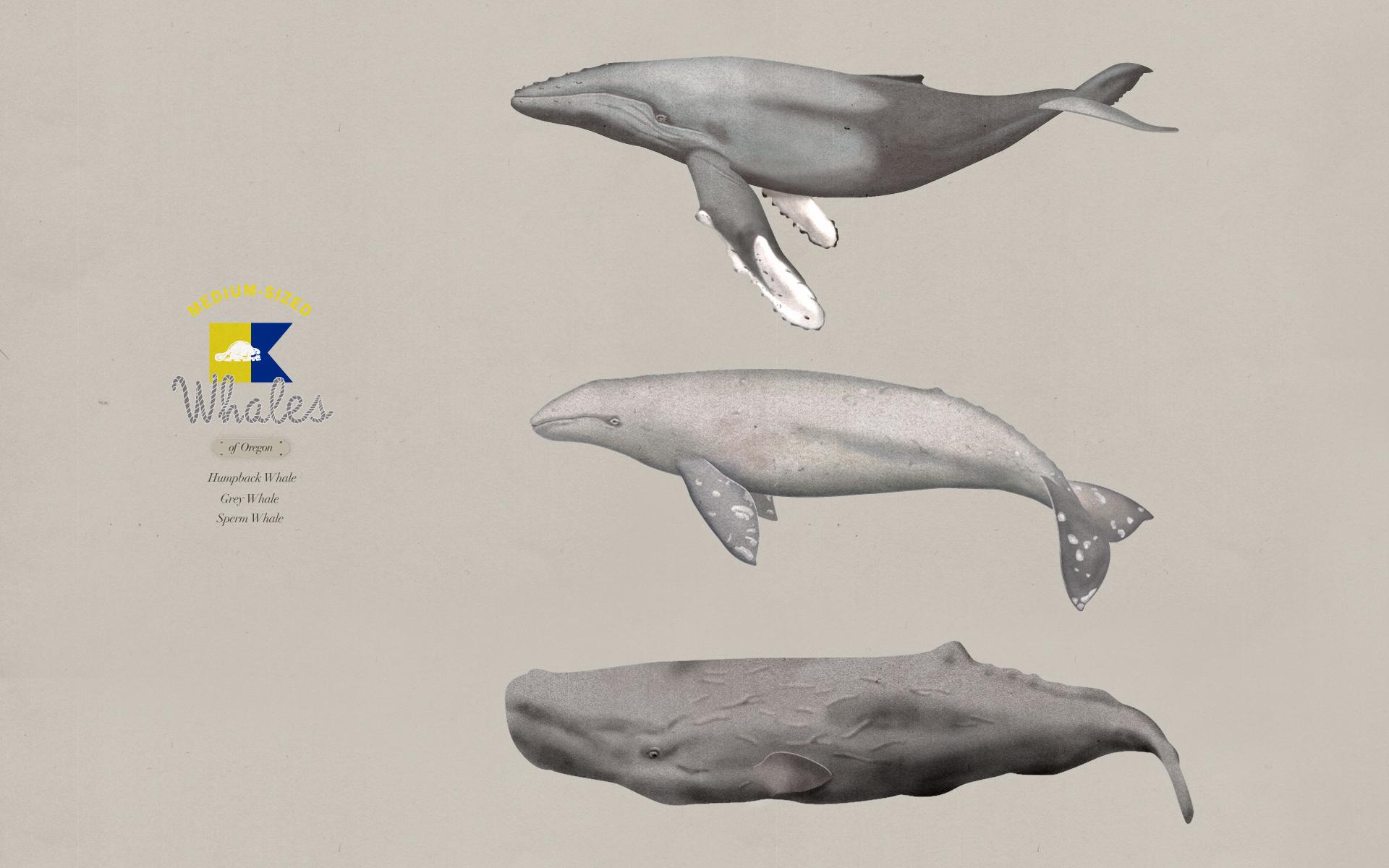 Desktop Wallpaper, Whales of Oregon : FORTPORT